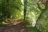 Waldweg (83900)