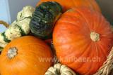 Kuerbis / Pumpkin (84272)