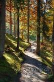 Wald (84311)