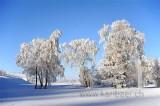 Rauhreif / Hoar Frost (91155)