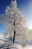 Winter (91198)