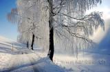 Rauhreif / Hoar Frost  (91191)