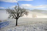Nebelgrenze (80644)