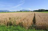 Getreide (96904)