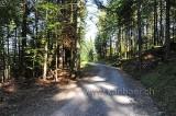 Wald (90957)