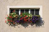 Blumenfenster (96975)