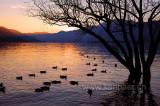 Lago Maggiore (119379)