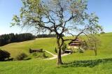 Fuerschwand (126782)