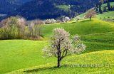 Fruehling / Spring (2689)