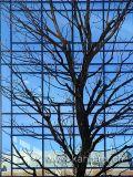 Fassade mit Baum (06330)