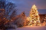 Weihnachtsbaum (8303)
