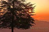 Baum / Tree (8606)