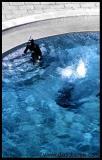 Careful Swimmer (Póvoa de Varzim - PT)