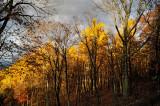 Shenandoah Sunshine