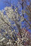 Spring '09 (DXO conversion)