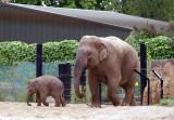 Mother and Baby Elephant Dublin Zoo.jpg