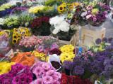 Irish Spring.jpg