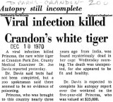 1970 - article on cause of death of Princess, Crandon Park Zoo's white tiger