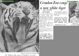 1970 - article about Rajah the white tiger donation to the Crandon Park Zoo a week before Princess died - Part 1