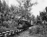 1950's/1960's - the Crandon Park Train chugging through the wilderness of Key Biscayne