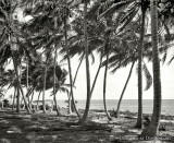 1910 - Biscayne Bay through the cocoanut trees