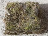 Examen du nid.