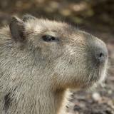 A Grumpy Chap