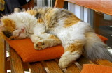 HOLIDAY CATS GALLERY