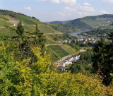 VINEYARDS & RIVER SAAR