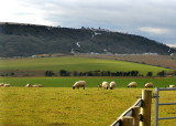 ON THE SOUTH DOWNS