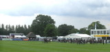 THE MAIN SHOW RING