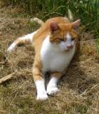A FRIENDLY FARM CAT