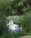 LAKESIDE VIEW . 1