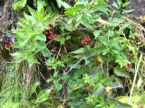 AUTUMNAL HEDGEROW