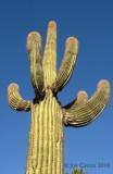 cactus_9468_01.5.psd