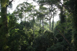 The view at 30 meter on lowland dipterocarp forest