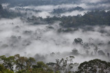 Danum Valley, Sabah, Malaysia - Landscape