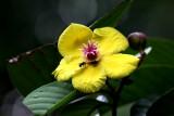 Danum Valley, Sabah, Malaysia - Flora