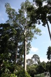 Rainforest Discovery Centre canopy walk