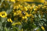 Original Busy Bee