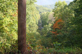 October 2009 - Cohutta WMA and Tumbling Creek Road -