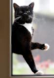 Please,let me in !