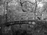 bridge near the strid,