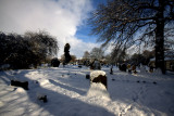 Winter Churchyard