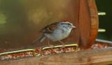 Sparrow, Various