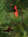 Birds of the Pocono Mountains, PA, 2010