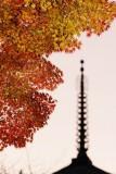 Japanese leaves (Kyoto, Japan)