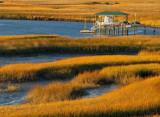 Florida Salt Marshes