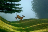 Home of the White Tail Deer