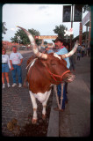 moo? - Fort Worth Stockyards Station